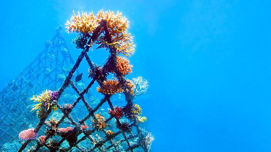Coral Reef Sculptures
