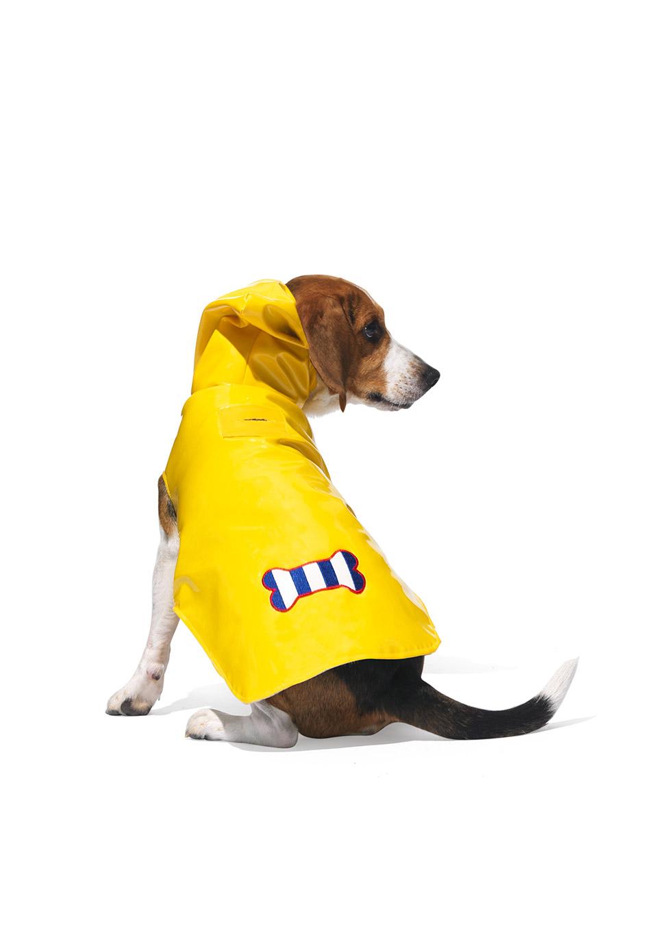 Rainy Day Beagle