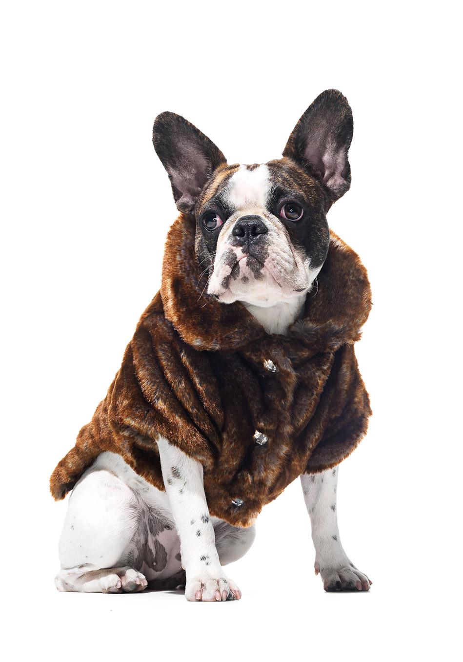 Park Avenue Faux-Fur Pet Jacket in Chinchilla