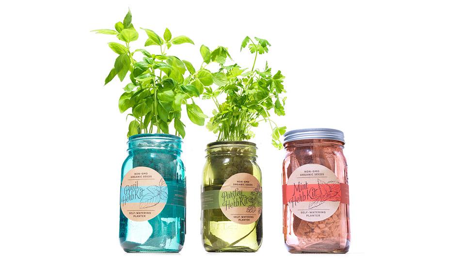 Modern Sprout Garden Jar Three Pack: Herb Essentials