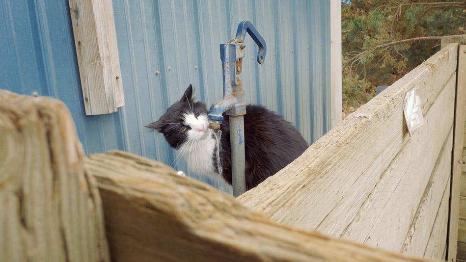 SpokAnimal's Farm Livin Program for Cats