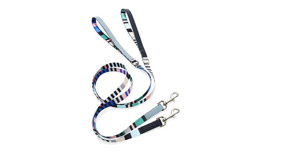striped webbing leashes
