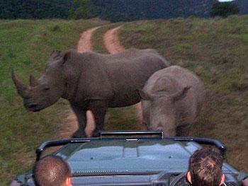 Andie the Rhino