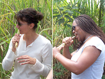 Book Club travelers try sugar cane for the first time.