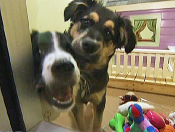 RJ and Rochelle stay in Sophie's Room at PAWS Chicago.