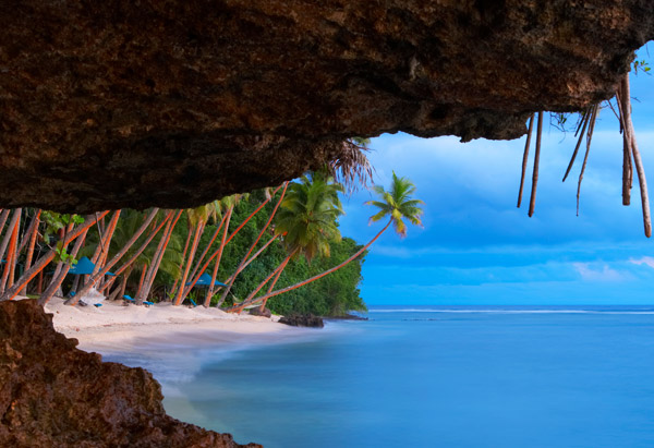 Coconut trees along beach on Vanua Levu in Fiji Islands