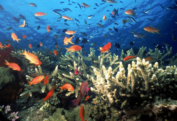Orange fish swimming around coral reef