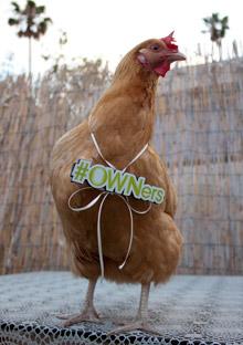 Chick-Chick Jalapit