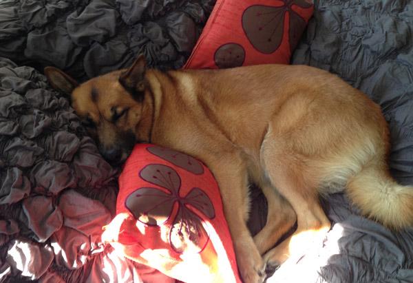 Cassandra's dog, Clover