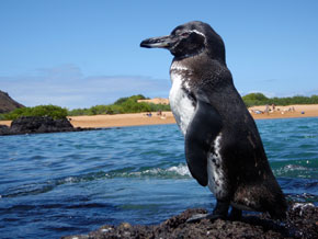 Animals in the Galapagos