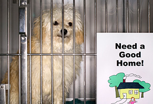 Homeless pet in a cage
