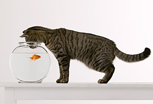 Cat with a fish bowl