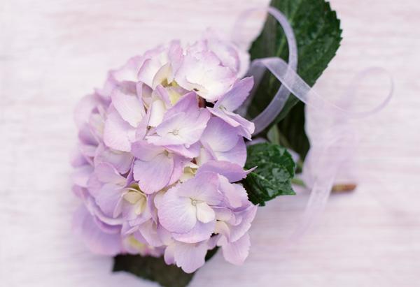 Corsage of hydrangea