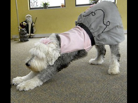 Dog preforming trick