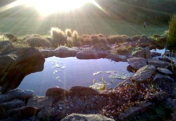 Sunlight by the pond