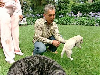 Cesar Millan, the dog whisperer