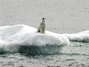 Melting sea ice spells disaster for Artic wildlife