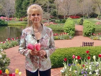 Annette's tulip garden