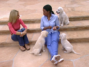 Oprah teaches her puppies to sit.