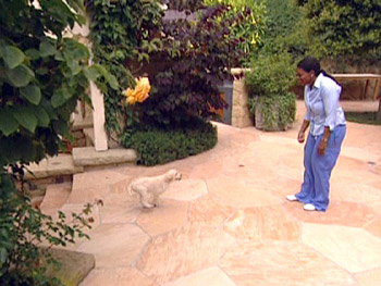 Oprah uses and hide-and-seek to teach her puppies to come.