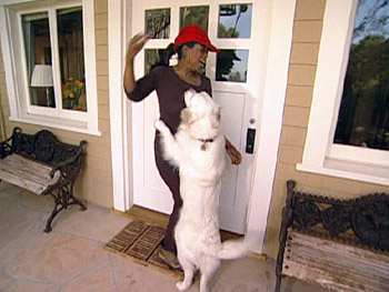 Oprah trains her dogs not to jump.