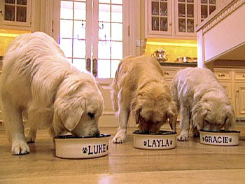 Oprah's dogs have great table manners.