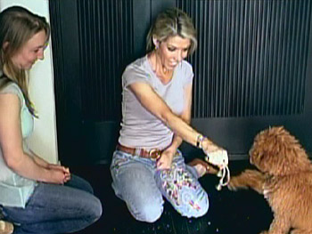 Tamar Geller has a three-step process for potty training your pet.