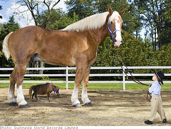 Radar and Thumbelina, the smallest and tallest horses