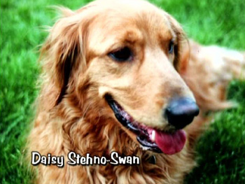 Daisy Stehno-Swan