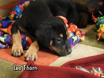 Leo Thorn