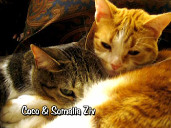 Coco and Somalia Ziv