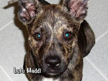 Lulu Maddi