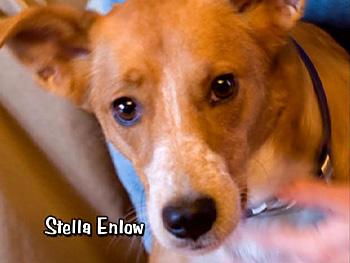 Stella Enlow
