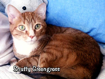 Snuffy Greengross