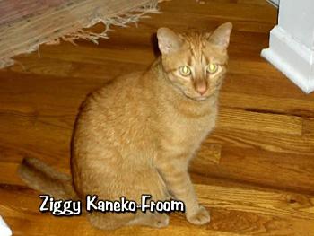 Ziggy Kaneko-Froom
