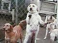 Lisa Ling investigates puppy mills.