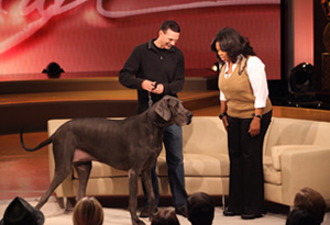 George, the world's tallest dog, with his owner, David, and Oprah