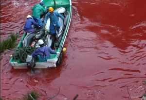 The dolphin slaughter
