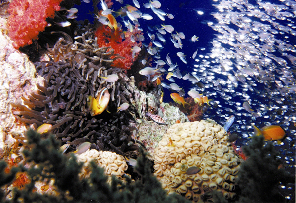 Underwater in Jordan