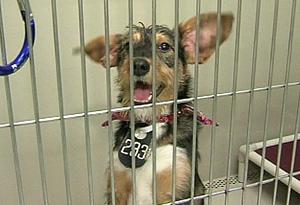 Fort Worth Animal Shelter