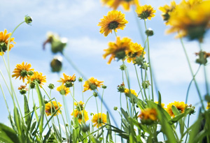 Plan your trip to see wildflowers in bloom.