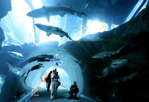 Visitors to the aquarium at the Dubai Mall.