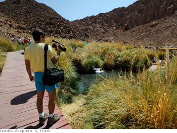 An oasis in the Atacama Desert